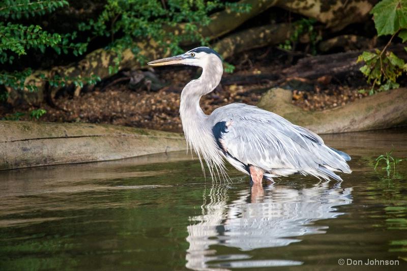GB Heron Profile 10-22-16 282