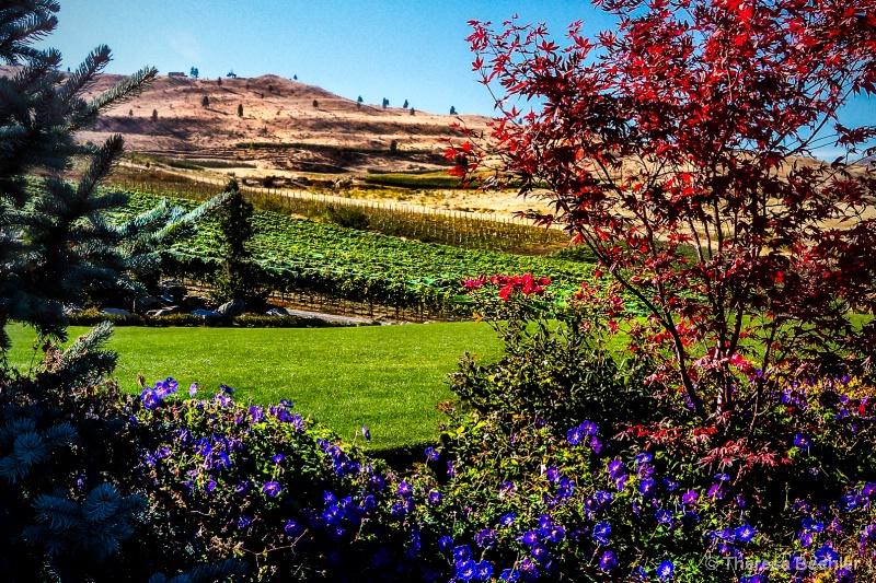 Colors of Fall - Chelan, WA