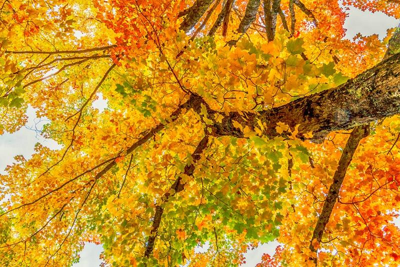 Under-Cover Autumn
