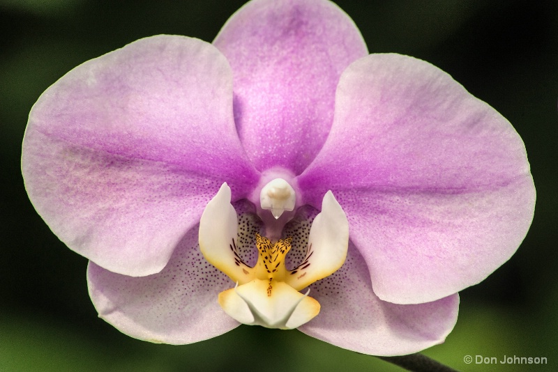 Beautiful Orchid 10-22-16 526