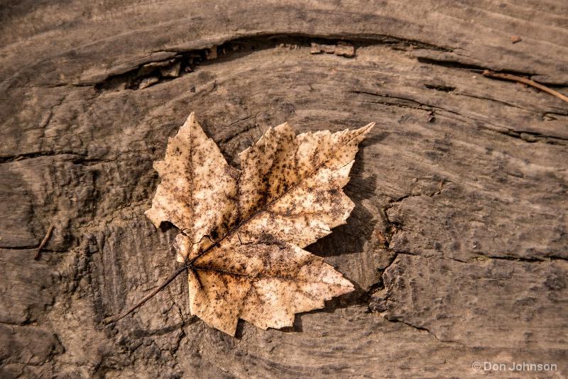Fallen Leaf 11-1-16 131