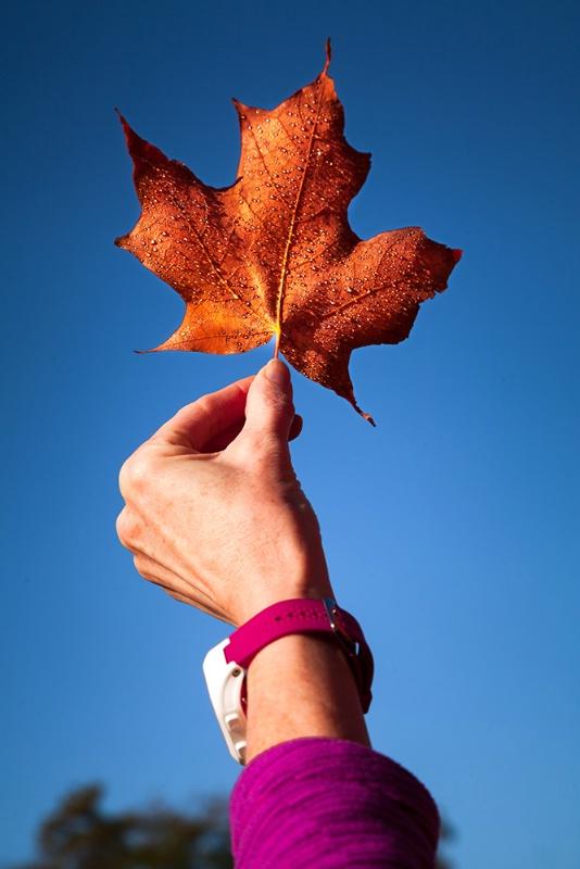 Sharing Autumn