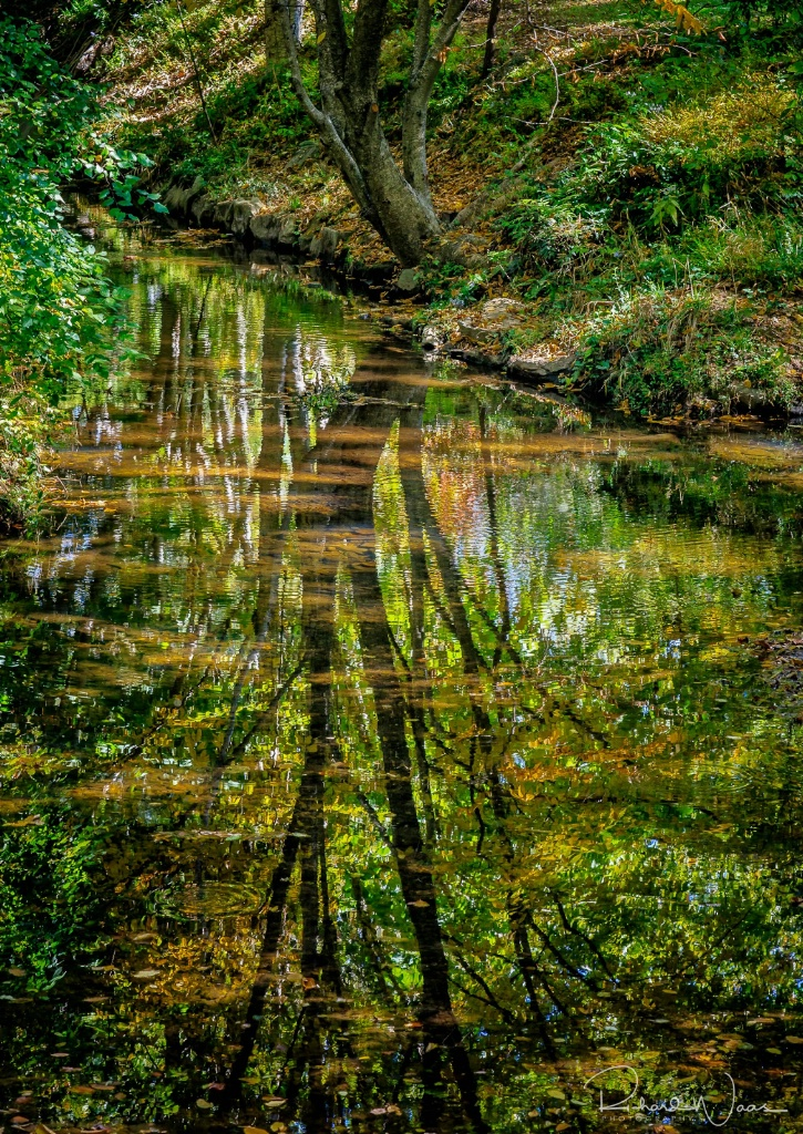 Reflection along the River