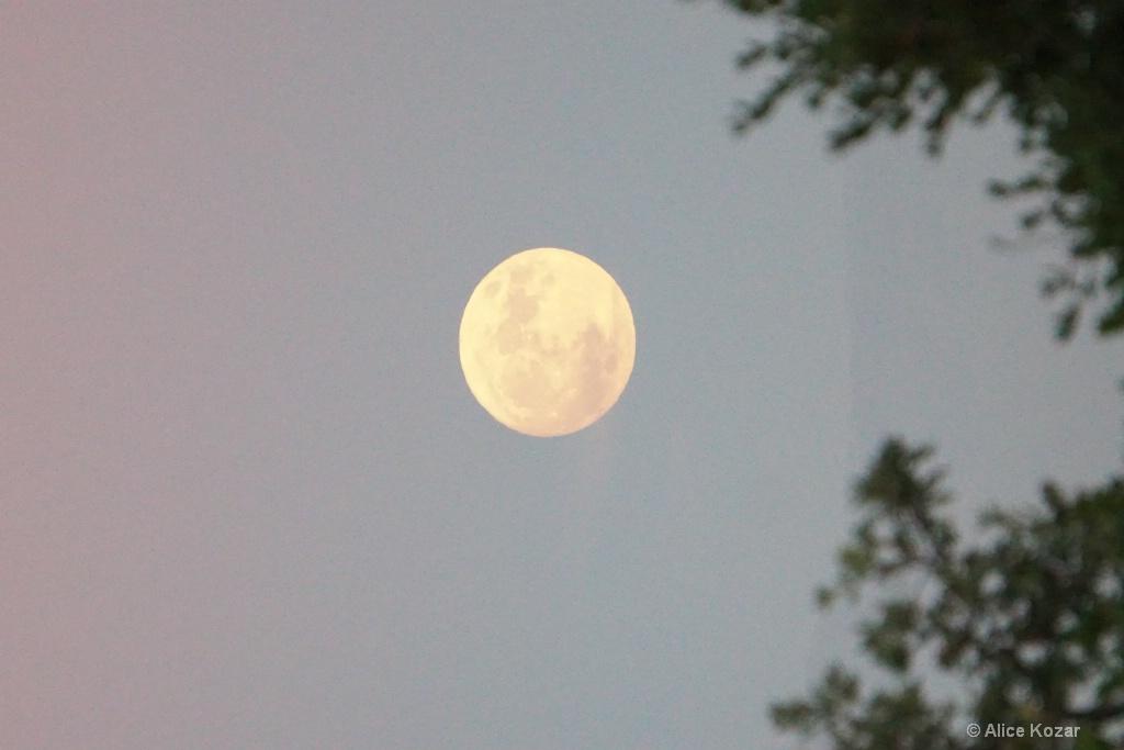 Big  Moon Brilliant Nov 13, 2016