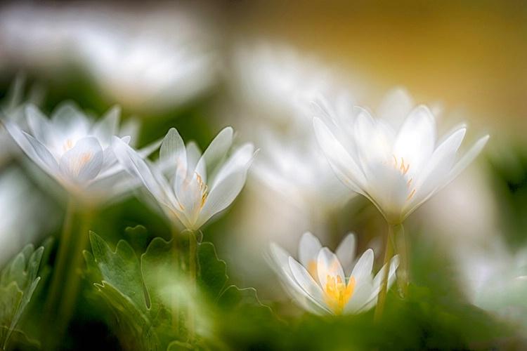 H0C0127 Flower 16
