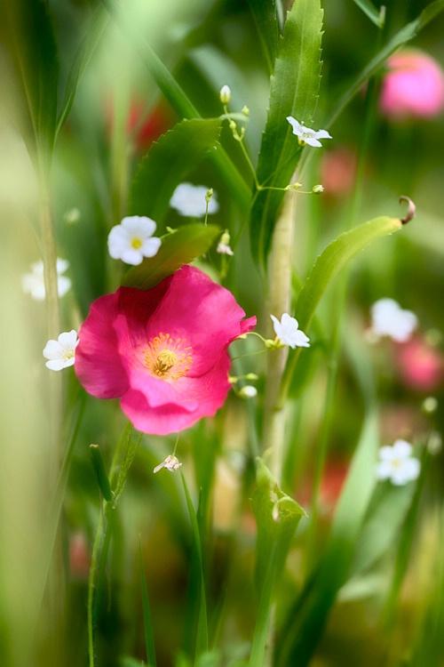 H0C3288 Flower 16