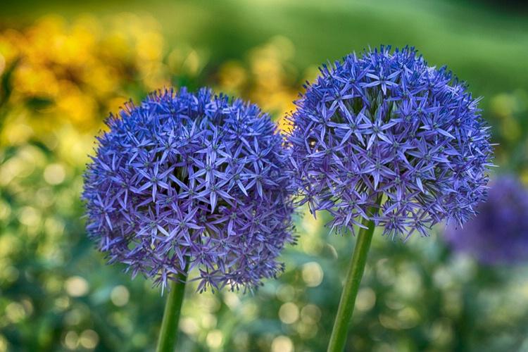 H0C2877 Flower 16