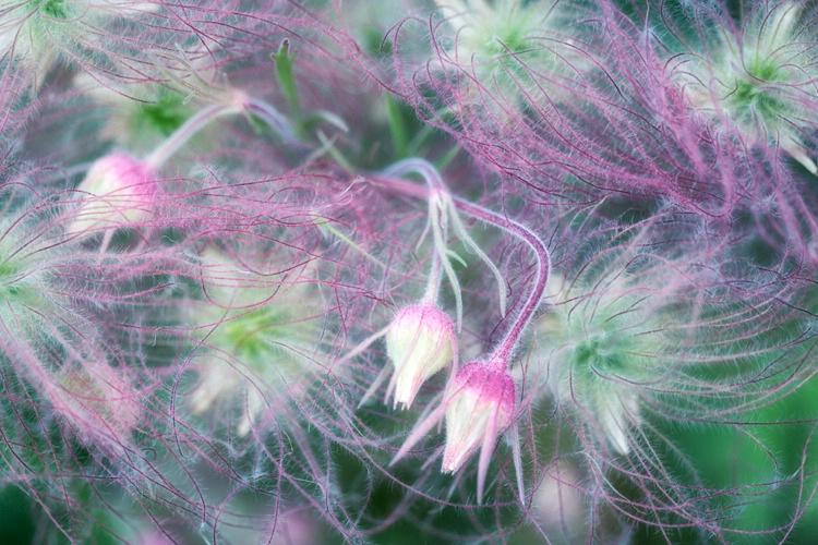 H0C2999 Flower 16