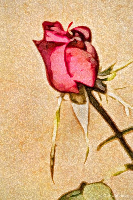 Artistic Profile of a Rose 10-22-16 579