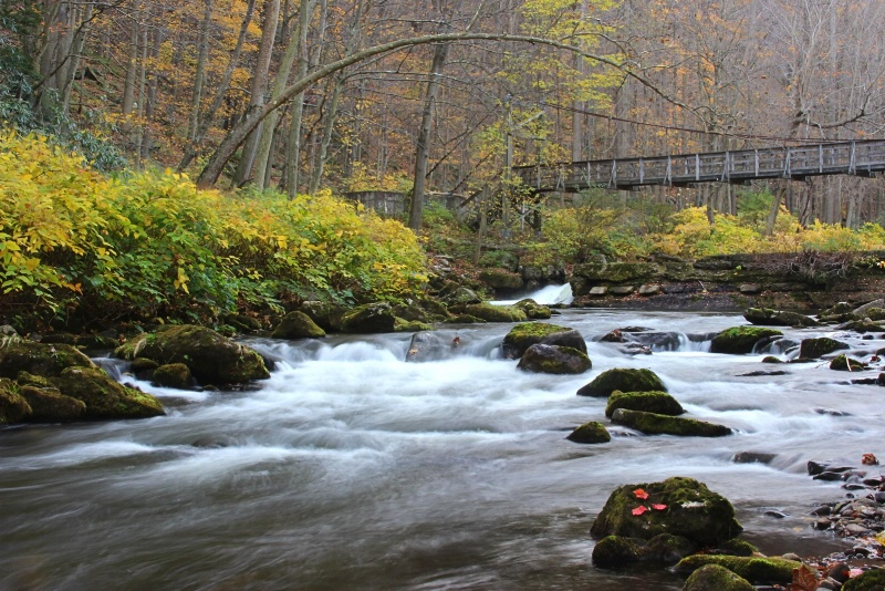 Late Fall Along the Savage River