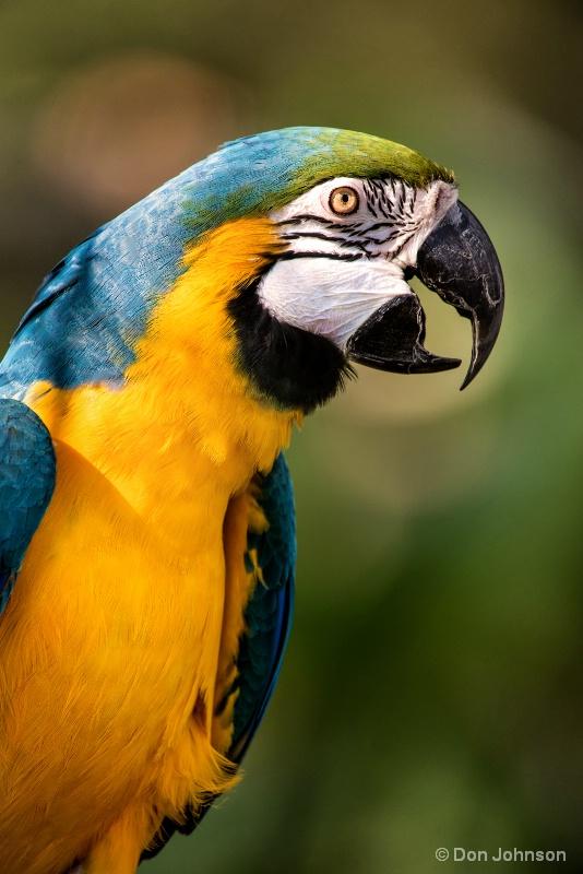 Beautiful Macaw 10-22-16 756