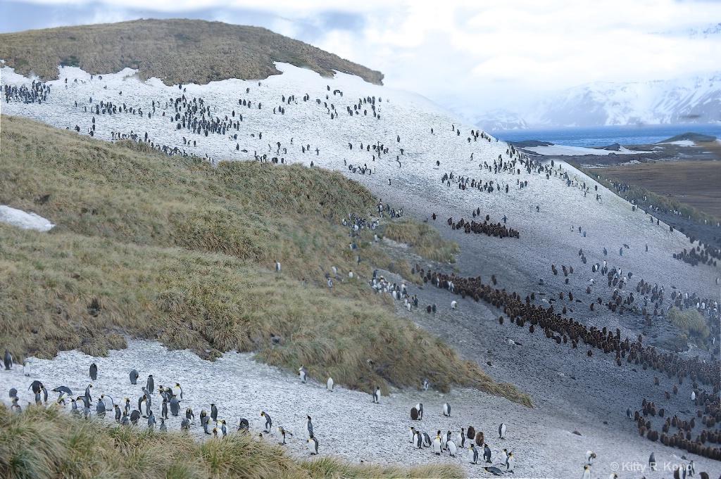 Many Penguins - Salisbury Plain - Curvature of the