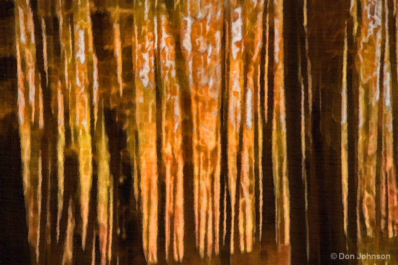 Moody Forest 11-1-16 191