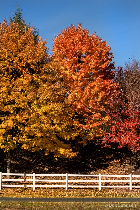 Beautiful Fall Trees 11-29-16 003