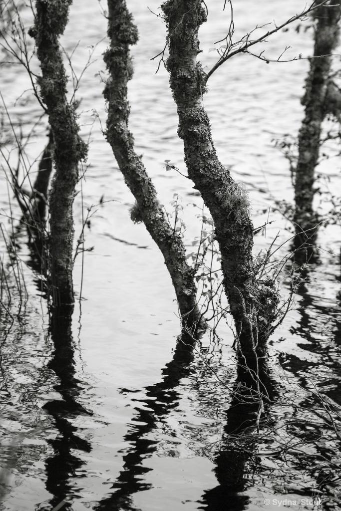 cairngorms marshland