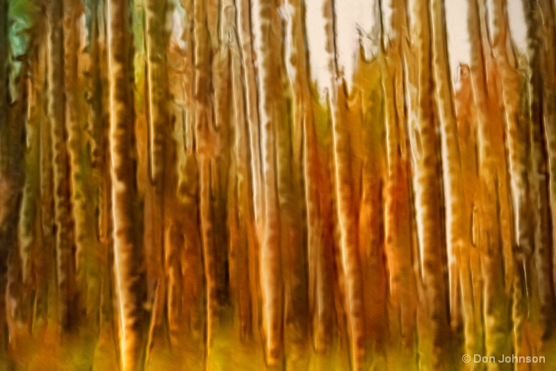 Swipe of a Forest 11-29-16 136