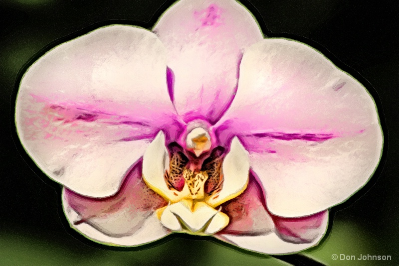 Beautiful Artistic Orchid 10-22-16 526