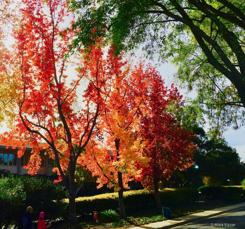 Autumn's Last Colors