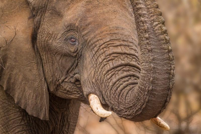 Elephant Greeting  1654