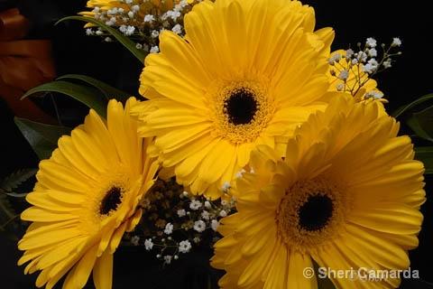 Three Yellows