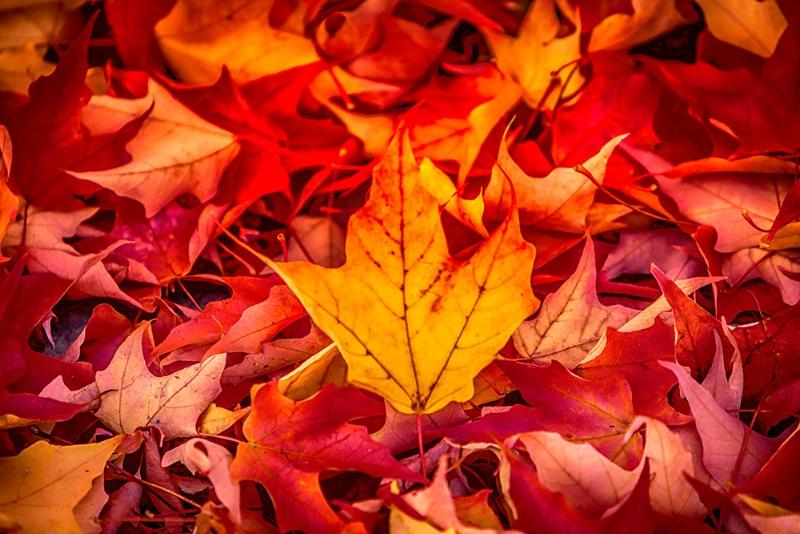 Autumn's Finale