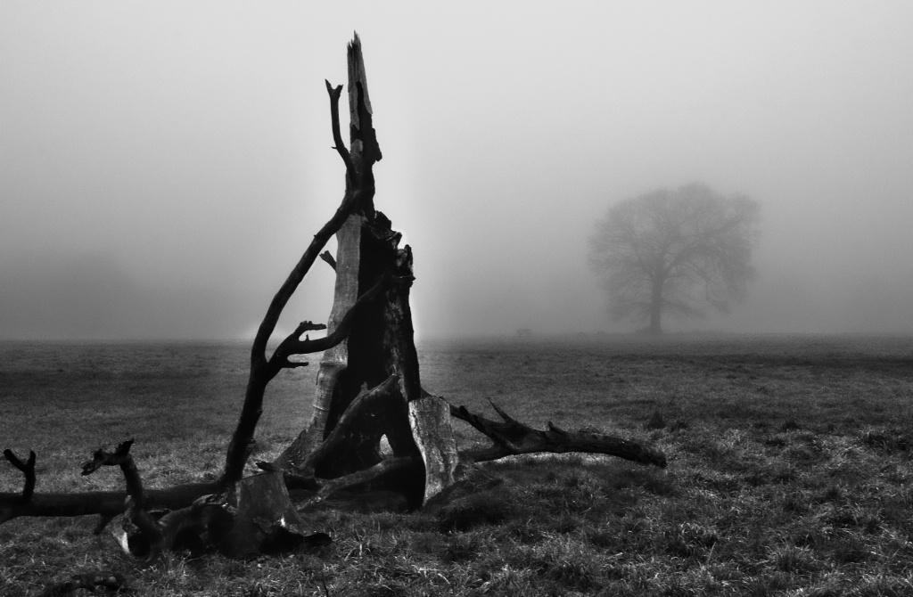 Dead tree in the fog