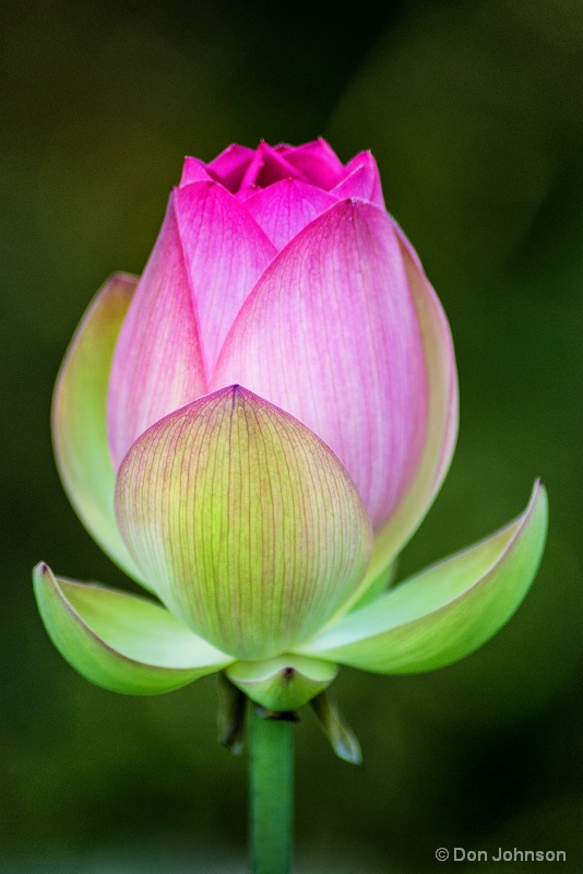 Lotus Profile 7-17-16 226
