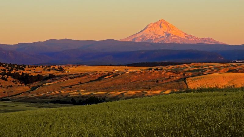 Wheat Land Sunrise