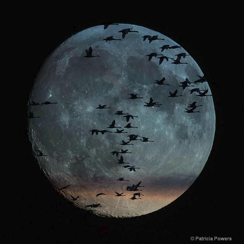 Full Moon Fun