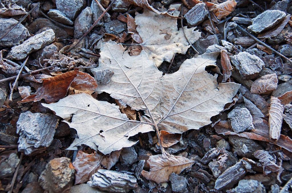 Frosty Leaf 2