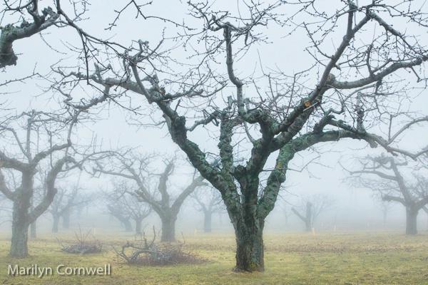 Foggy Day in Niagara - I