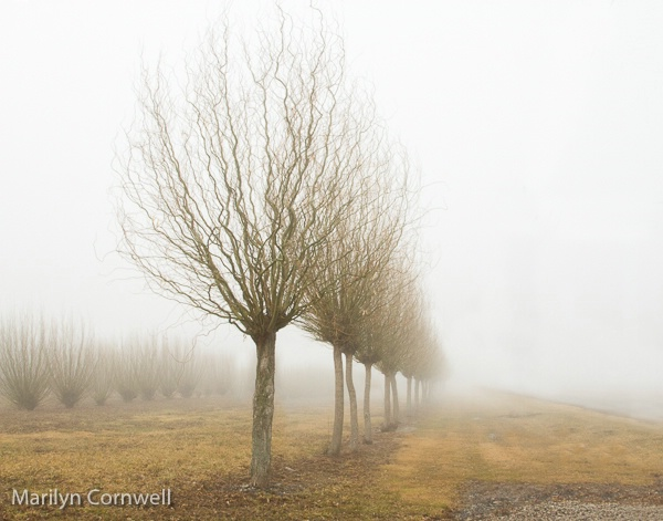 Foggy Day in Niagara - III