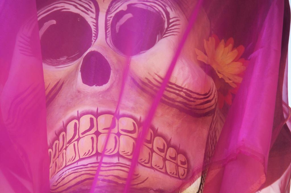 Detailed Skull
