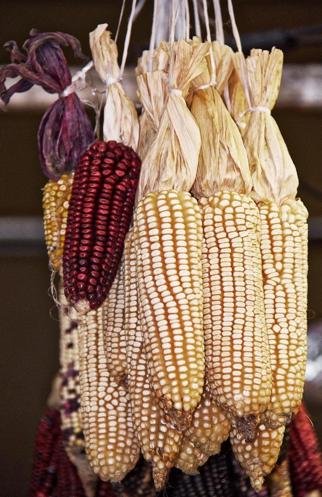 Hanging Dry Corn