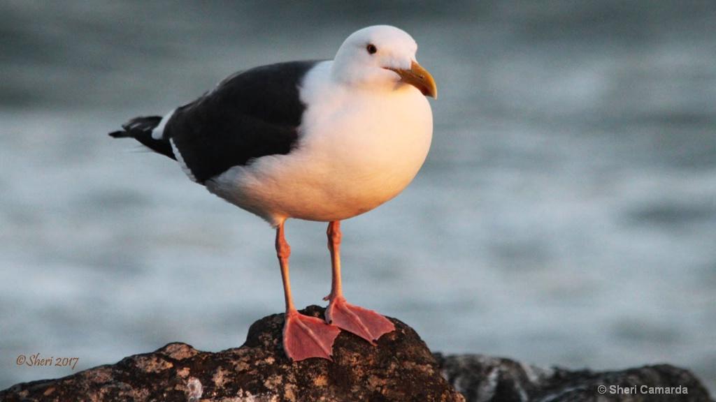 Stunning Seagul