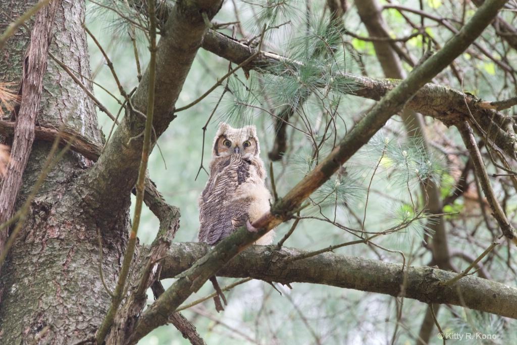 Cutest Little Owlet