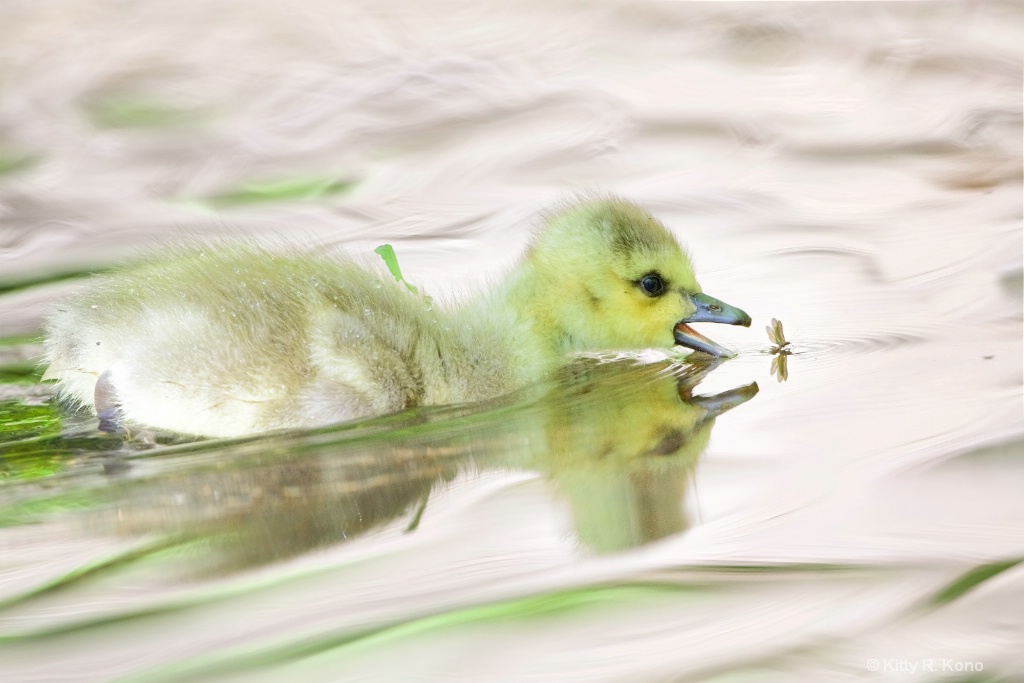 The Duckling and the Mayfly
