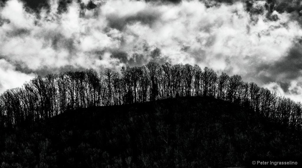 Trees on Mountain Top