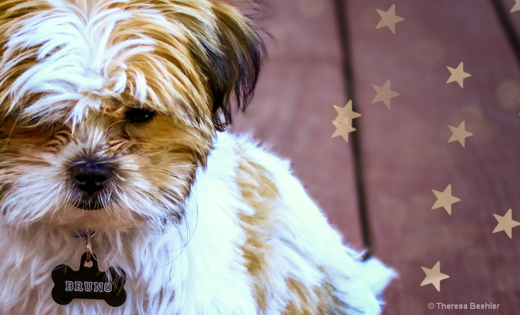 Bruno - my star