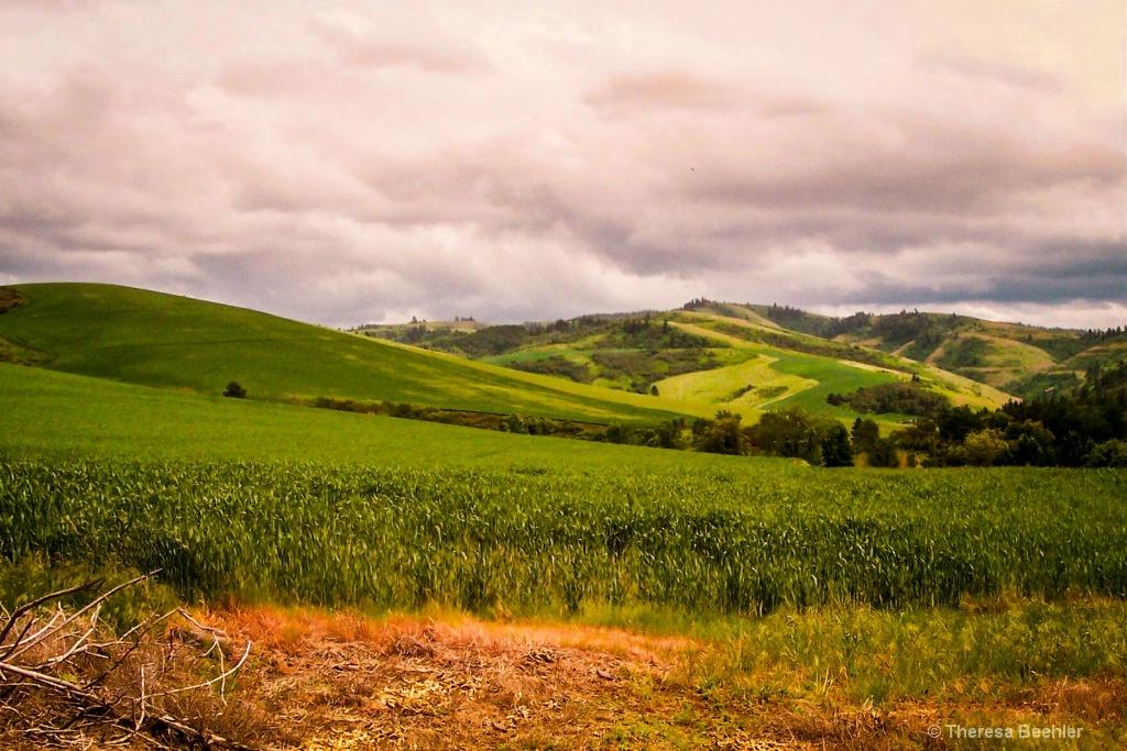 Spring - Washington State