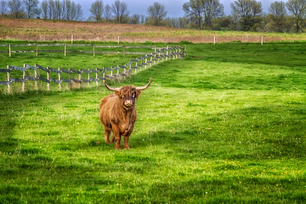 Green Pasture  7489