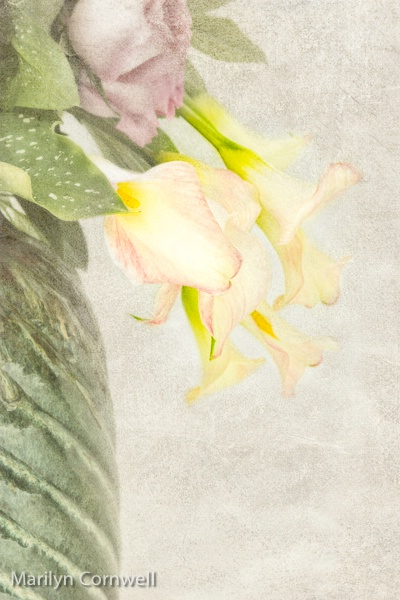 Still Life Lilies