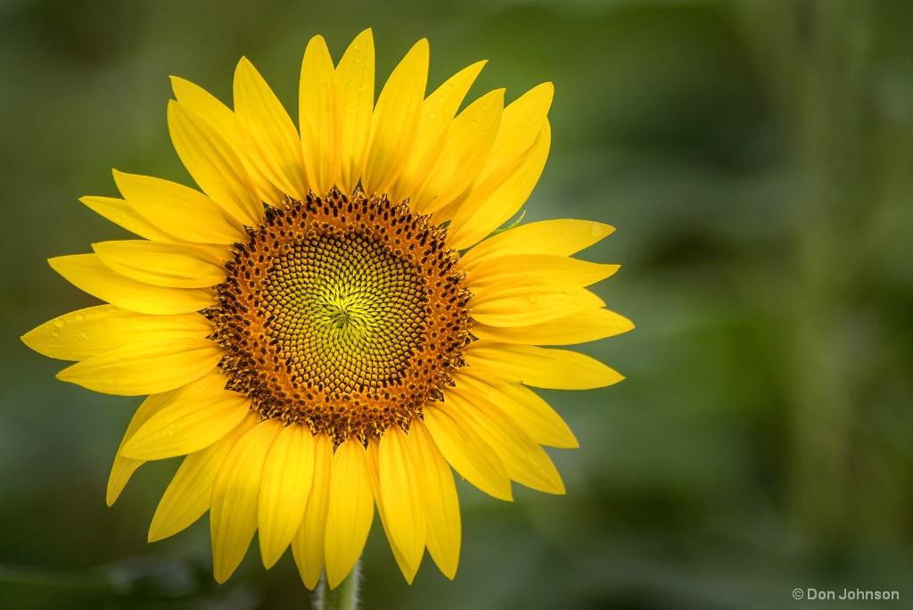 Full Bloom 7-22-17 110