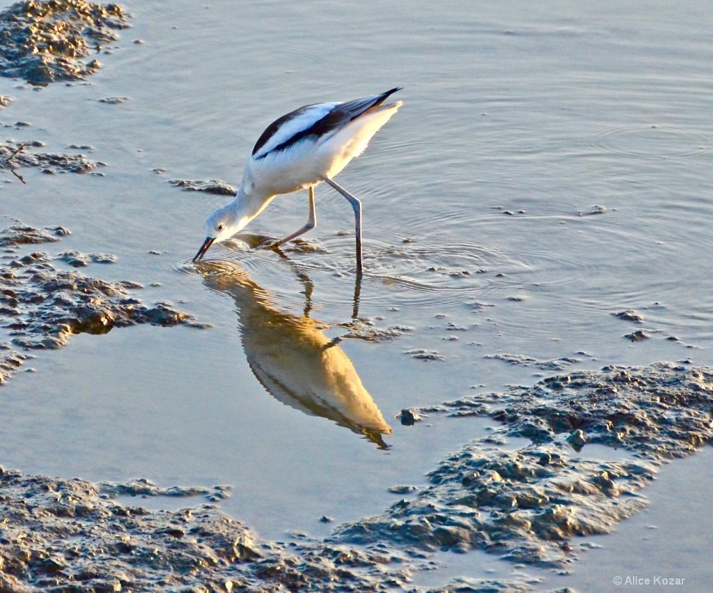 LowTide Marsh Fishing