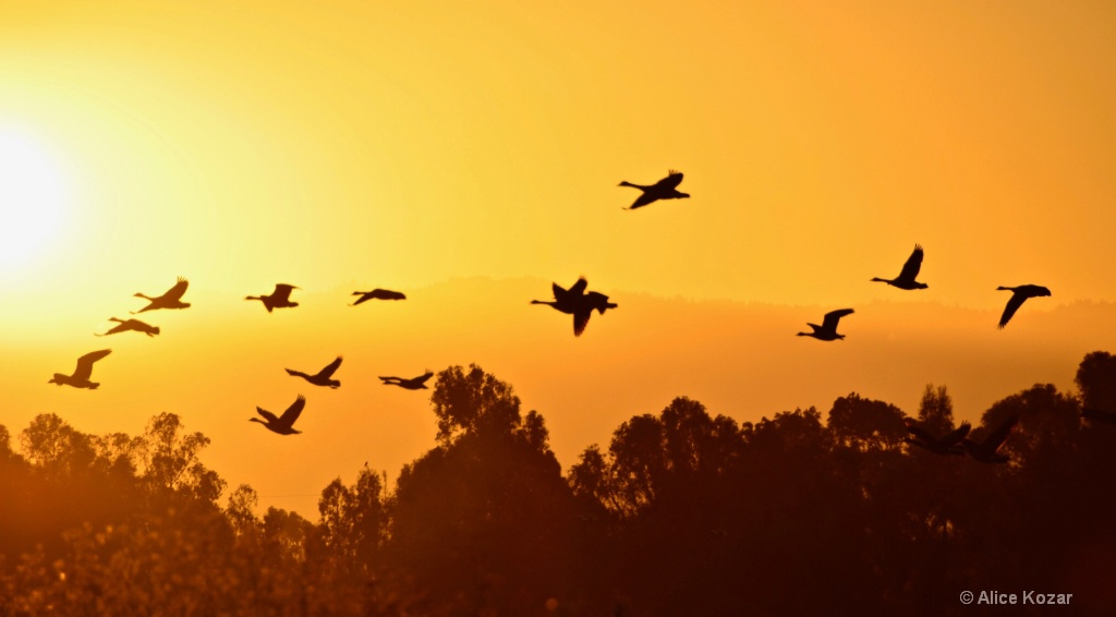 Soaring to our Roost