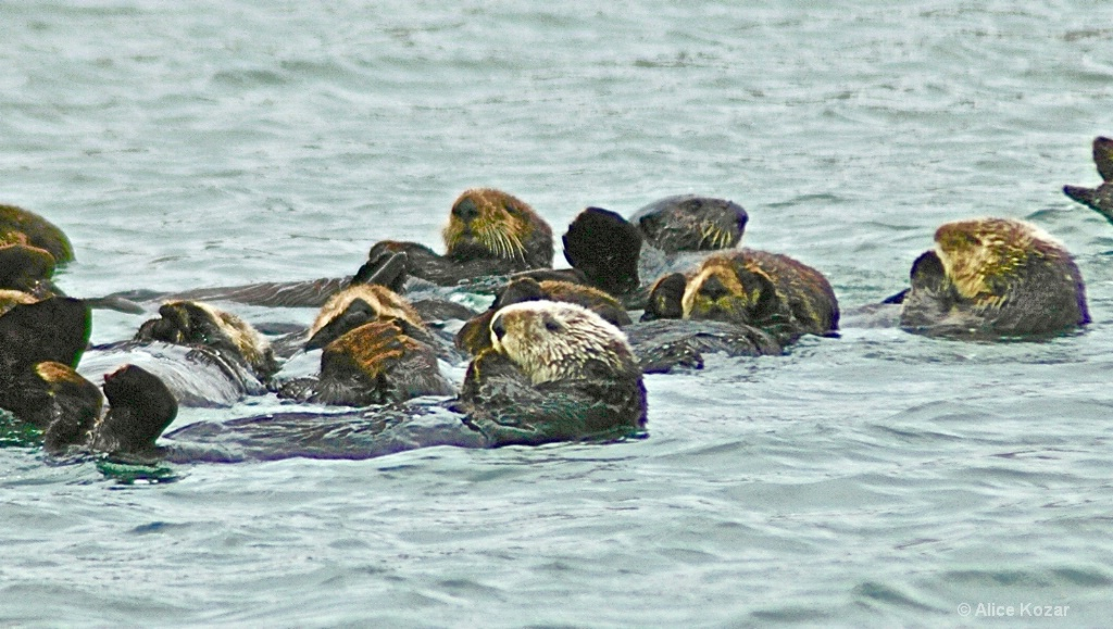 Sea Otters Praying
