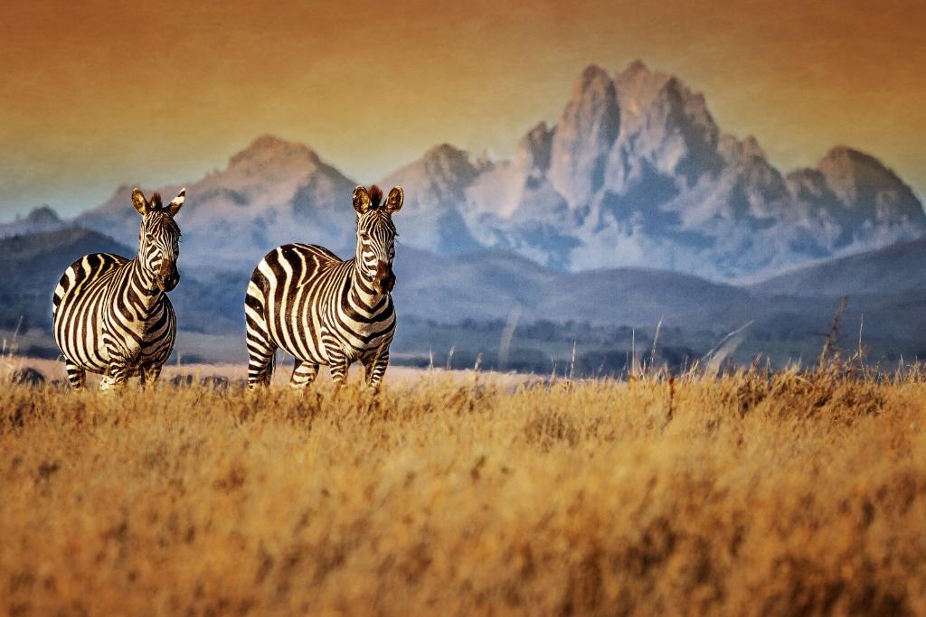 Mt. Kenya Visitors  5723