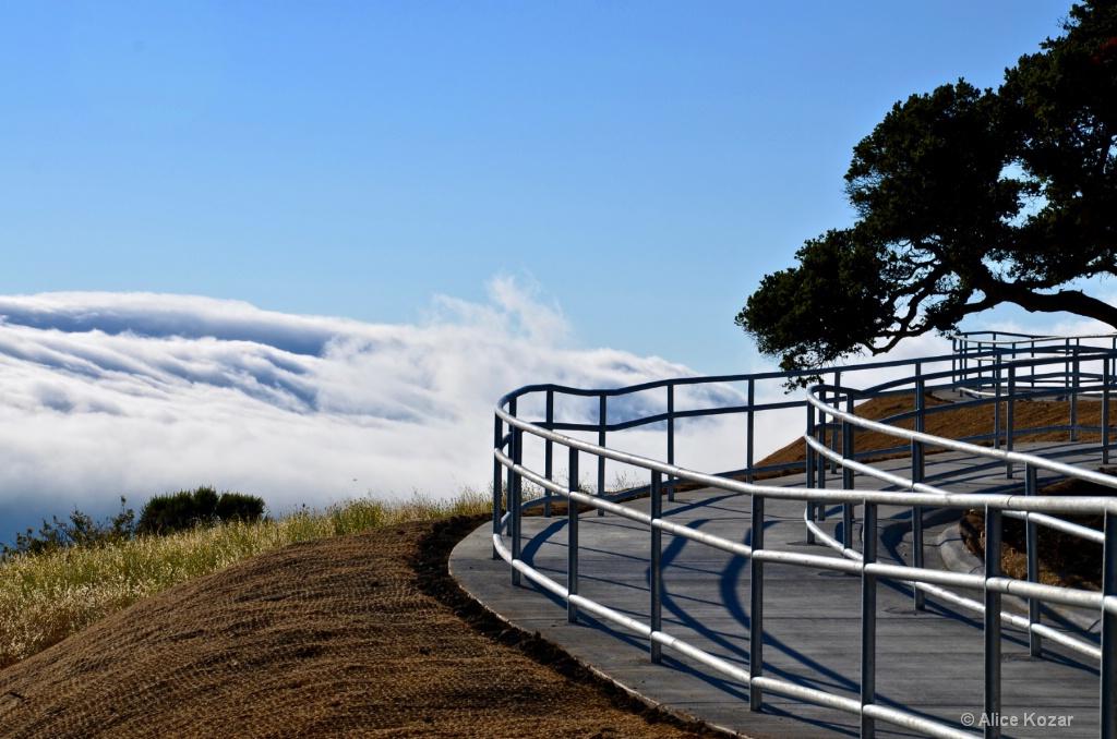 Majestic Fog Shelf