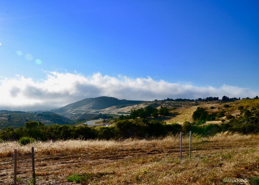 Summer Fog over Grass Hills