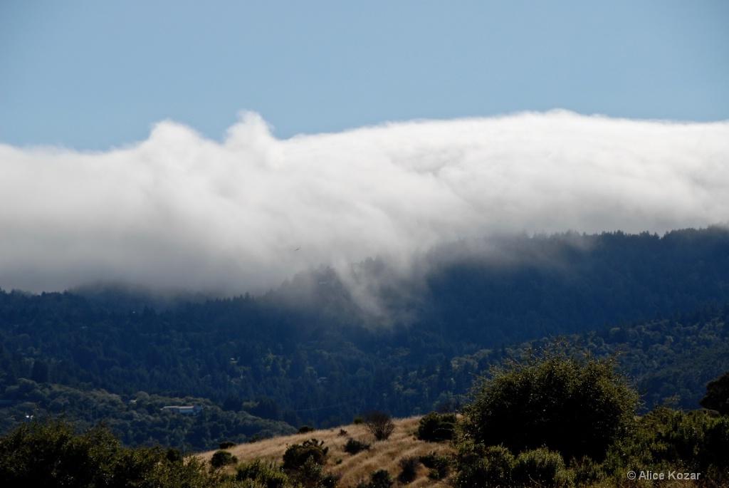 Approacing Fog up Close